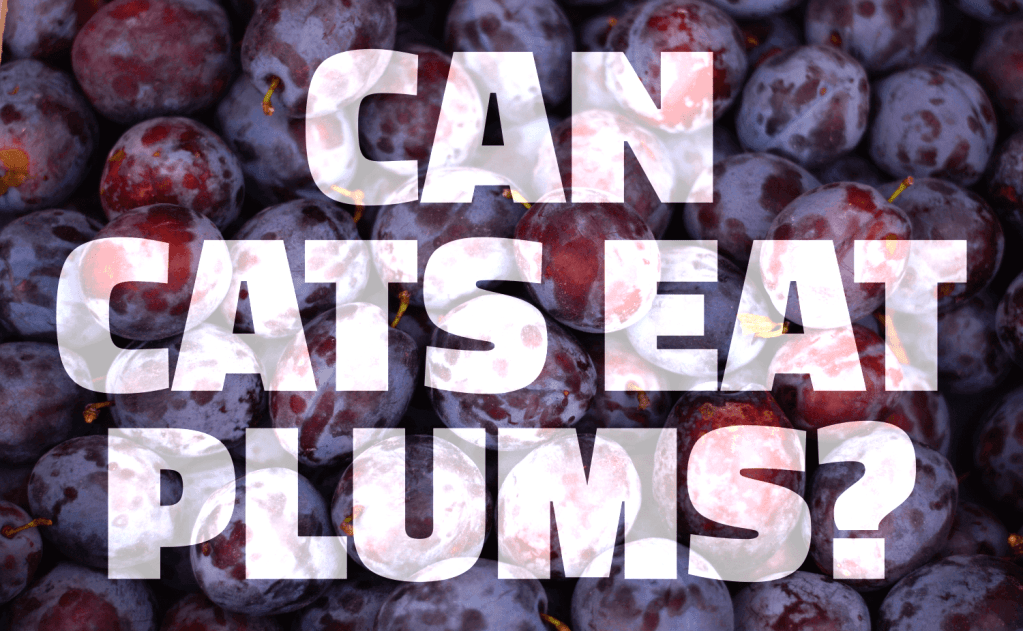 Can Cats Eat Plums?