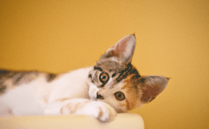 My Cat Was Stung By a Wasp. Now What?