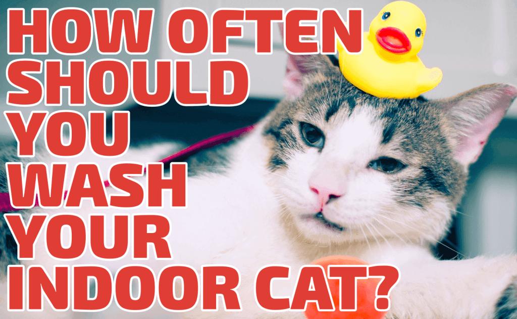 How often should you wash your indoor cat?