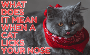 What Does It Mean When a Cat Licks Your Nose?