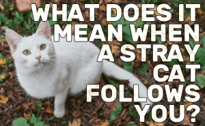What Does It Mean When a Stray Cat Follows You