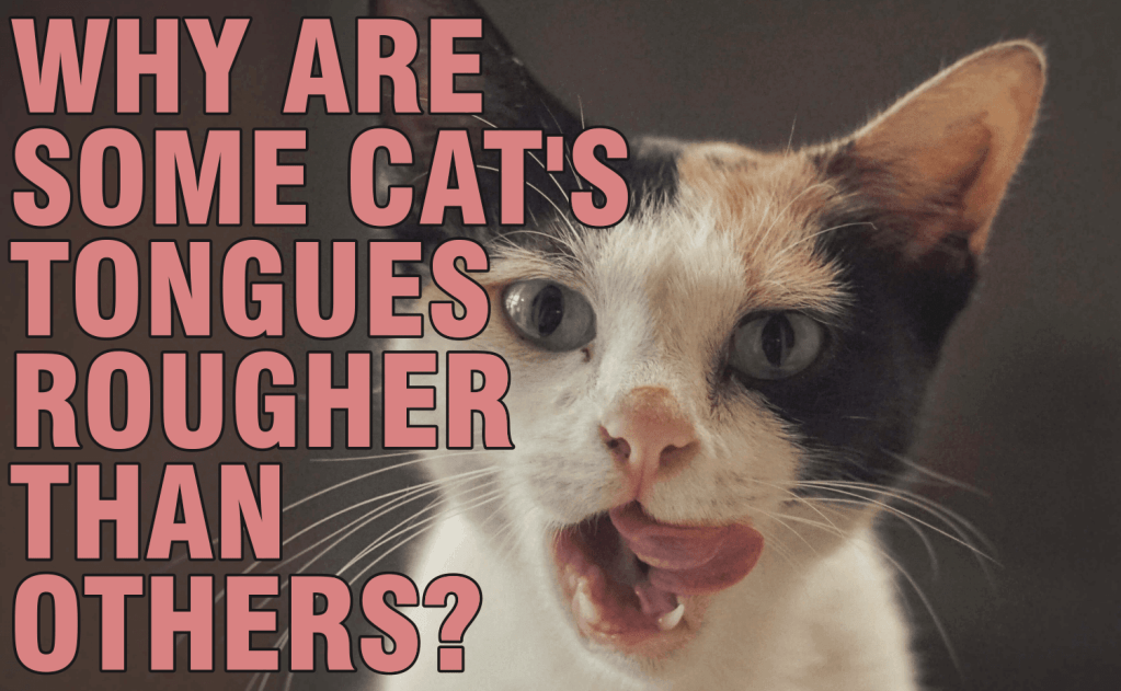 Why Are Some Cats Tongues Rougher Than Others?