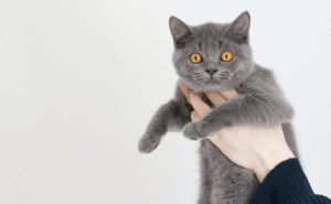 Why Does My Cat Sniff My Eye?