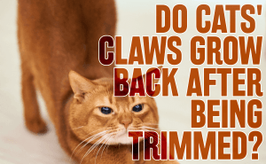Do Cat Claws Grow Back After Being Trimmed?