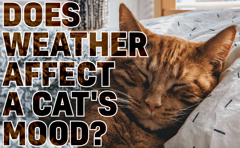 Does Weather Affect a Cat's Mood?