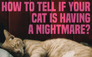 How To Tell if Your Cat Is Having a Nightmare
