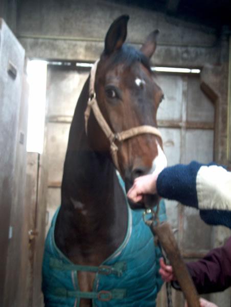 leverproblemen paard