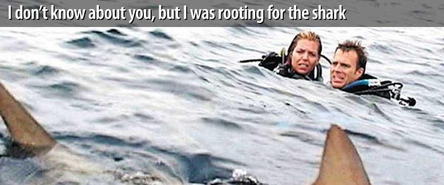 Go sharky!