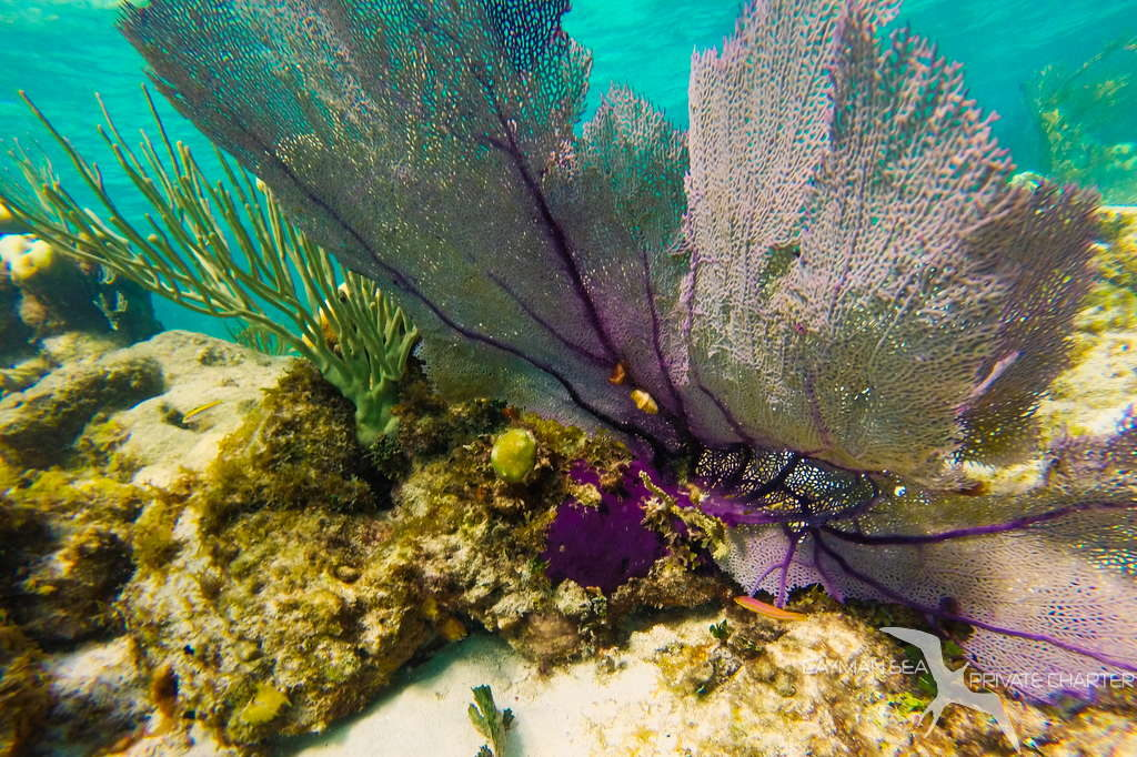soft coral on the reef in grand cayman