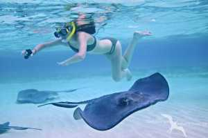 swimming with the stingrays on a private charter to stingray city grand cayman