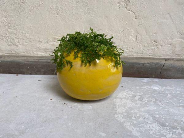 Matera Con Planta Bola. Amarillo Brillante. (M)