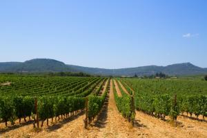 A Visit to Wine Country in South France with Sharon Nagel