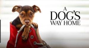 Movie: A Dog's Way Home