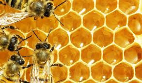 Beekeeping Basics with Mike Johnston