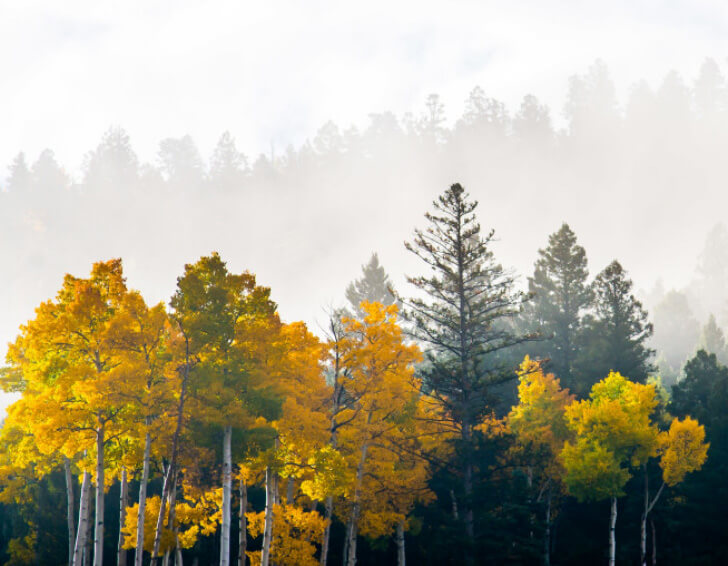 Why Angel Fire, NM is the best place to buy real estate in the mountains