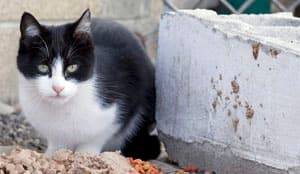 There are an estimated 30 million to 80 million feral cats in the U.S.