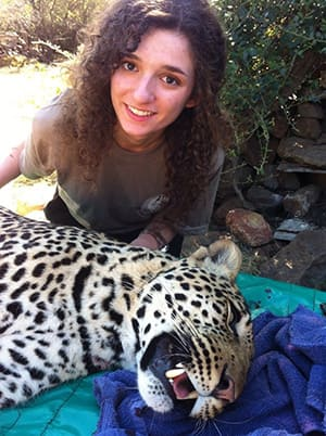 Lauren Fagen poses with a leopard that had been tranqulized at the Moholoholo Rehabilitation Centre. The centre is involved in research on the behaviour of the animals.