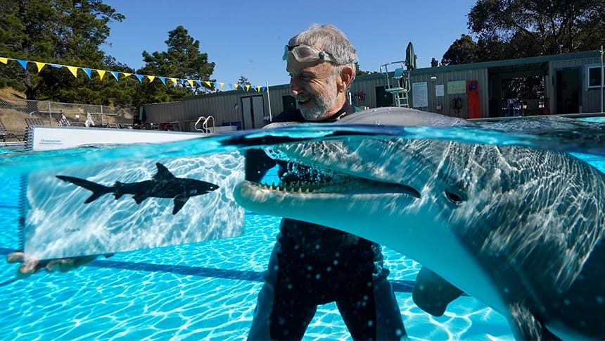 Roger Holzberg, a former creative director at the Walt Disney Co., hangs out in a pool with the robotic dolphin prototype.