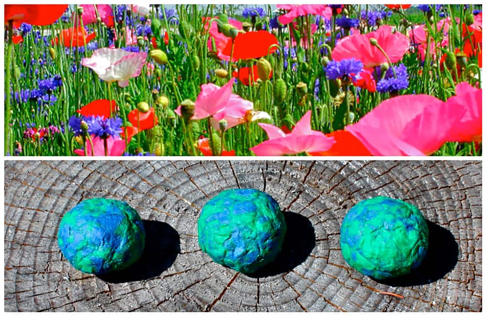 A collage of two images, one of three blue-and-green seed bombs and the other of a field of colourful wildflowers.