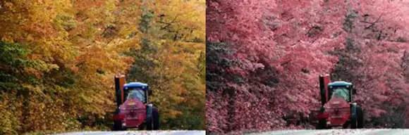 Color Blind Test Pot Leaf