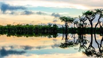 Querida Amazonia – Beloved Amazonia