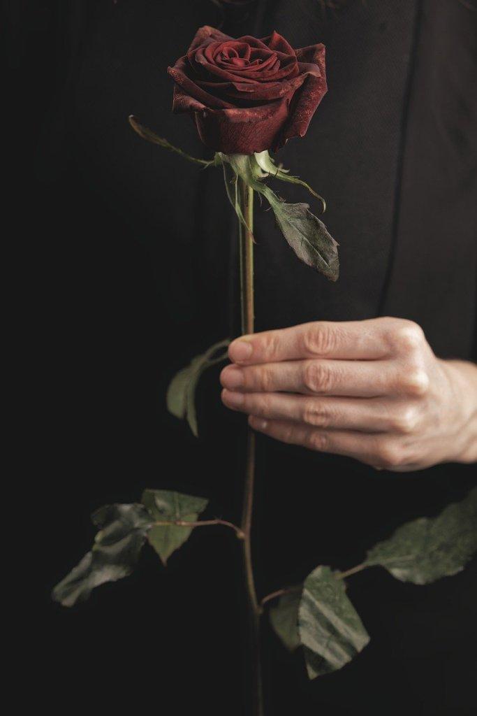 rose, flower, valentine's day-5951728.jpg