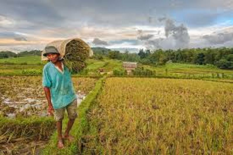 No to Rice Trade Liberalization Law, An Anti-farmer Measure