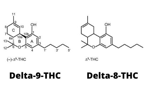 Quelles différences entre le THC DELTA 8 et le THC delta 9 ?