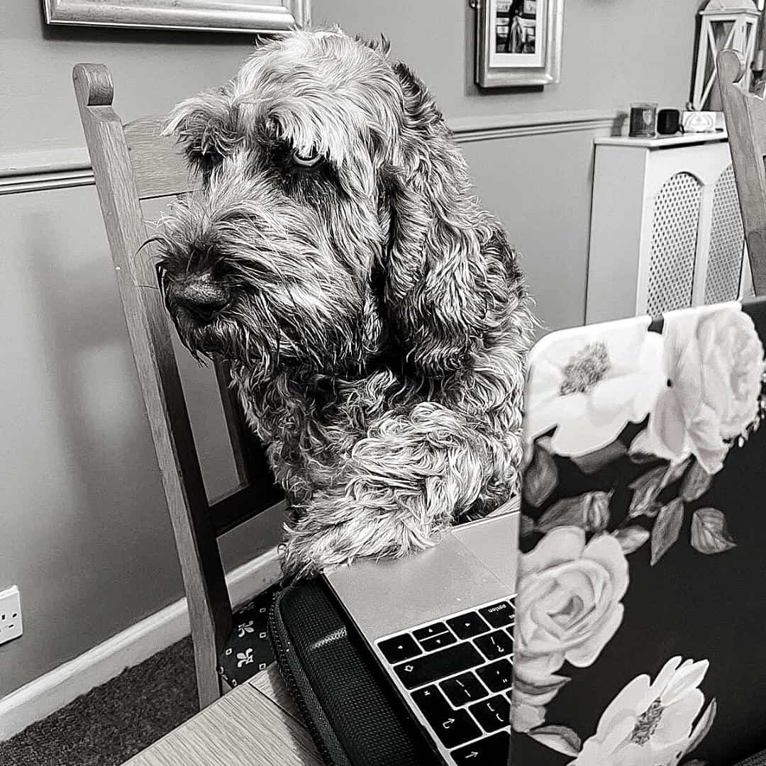pets in the office, dog friendly workplace