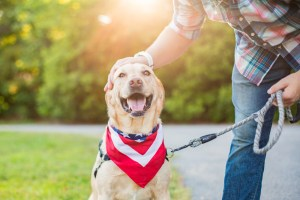 Dogs, Anxiety and the Fourth of July