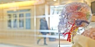 Ask A Doctor - Neurology – Strokes & Seizures