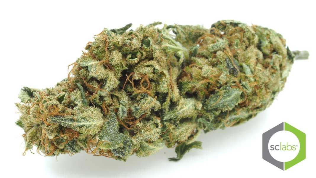 Diesel Puff hemp flower (image credit secretnaturecbd)