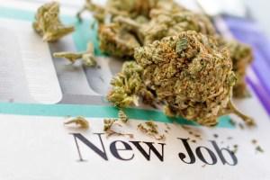 cannabis industry jobs