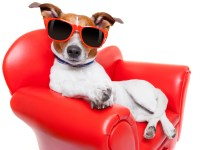 CBD_celebrity_pets_dogs_CBDToday