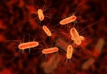 CBD Study-Antibiotics-CBD News-CBDToday