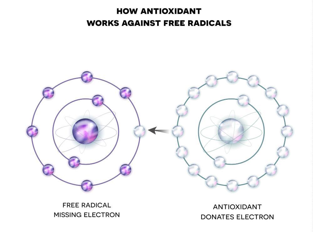 How antioxidant works against free radicals