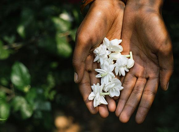 Photo of hands cupping flowers