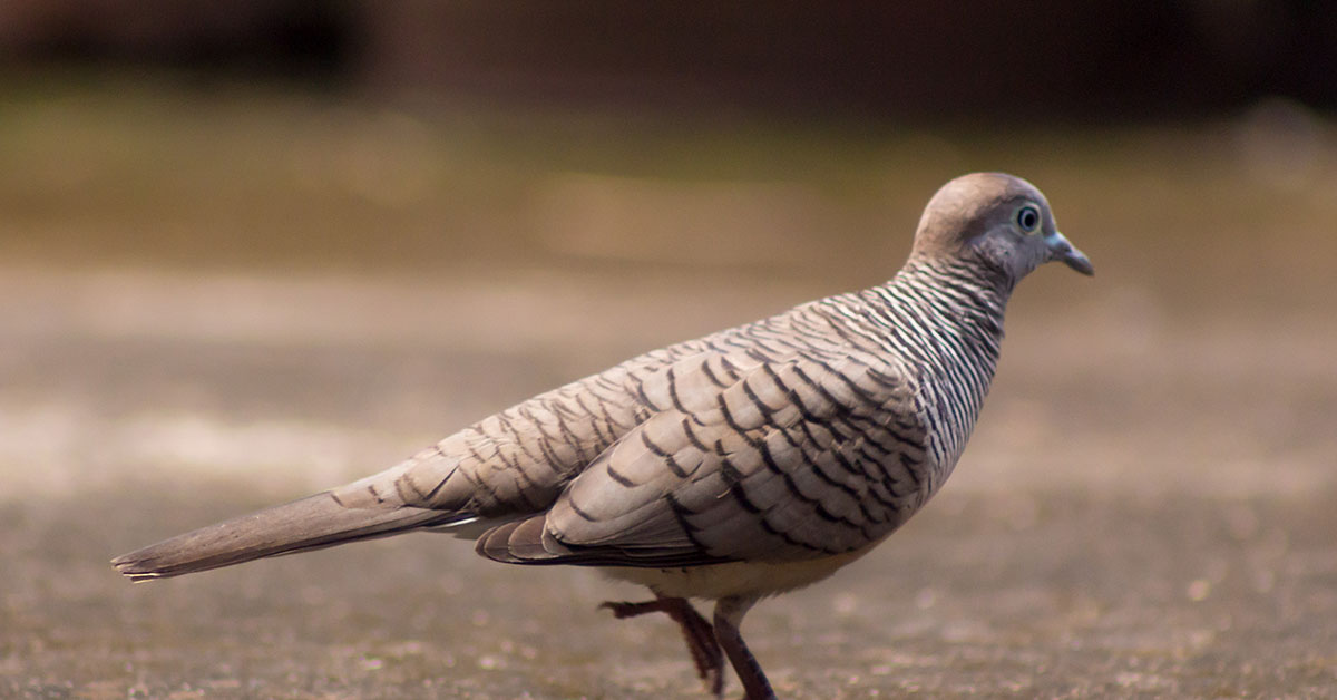 Image result for and the song of the dove is heard in our land, bible, art, picture