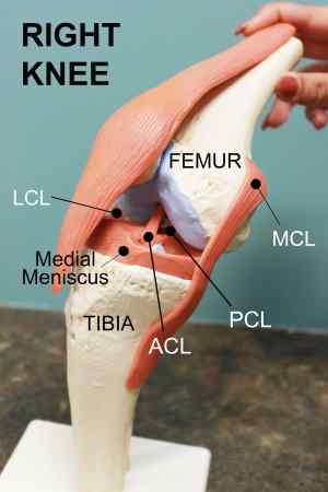 ACL Tears: To Fix or Not to Fix?  Coury & Buehler Physical Therapy