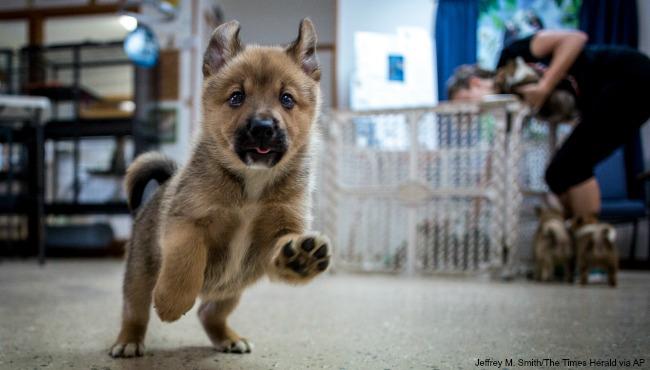 cottrellville-township-dogs-seized-2-ap-061616_214283