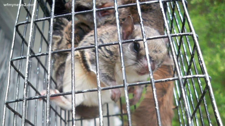 squirrel wfmy_560435