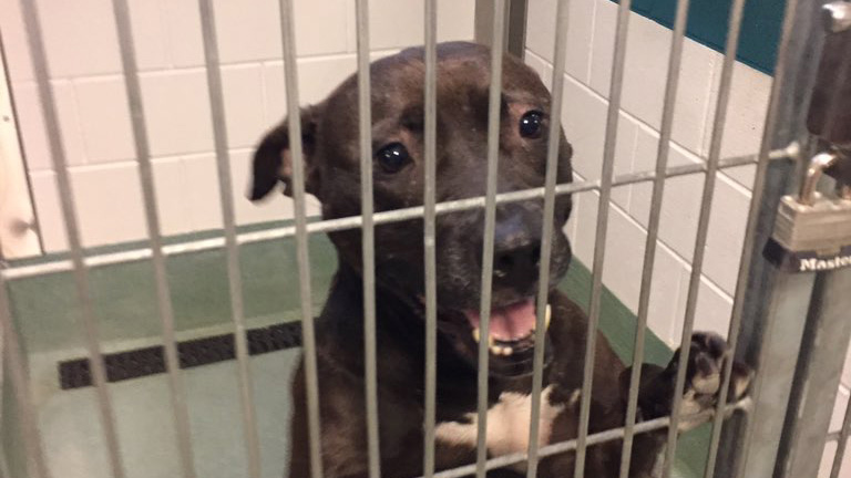 Wake county animal shelter_1530561623061.jpg.jpg