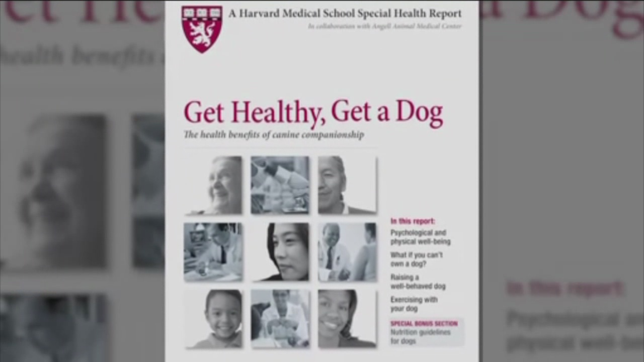 Get healthy, get a dog_98096