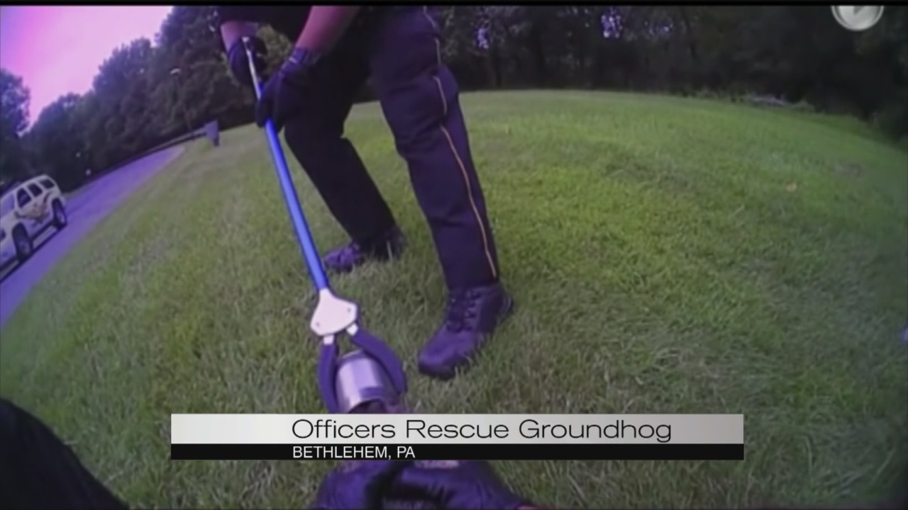 Groundhog rescue_113422