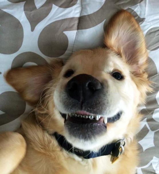 dog-braces_156245