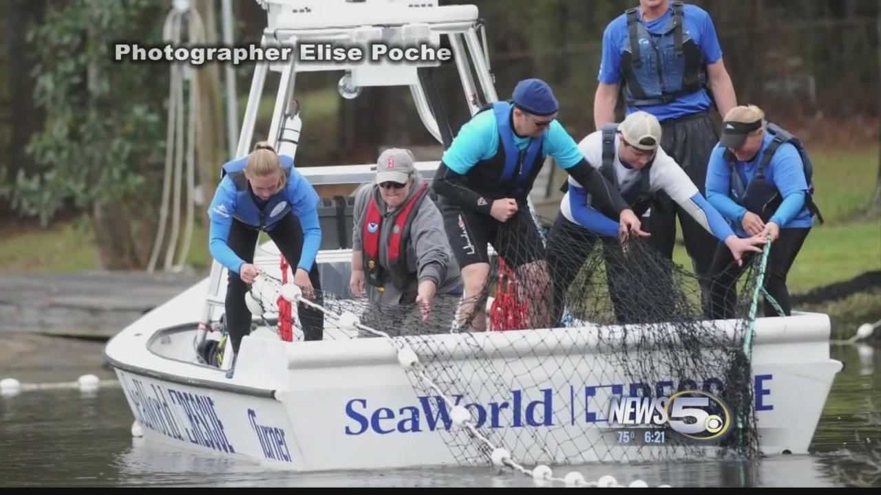 dolphin-rescue_164082