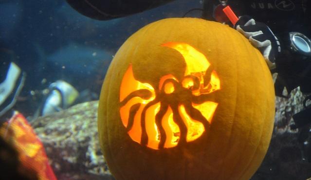 South Carolina Aquarium Underwater Pumpkin Carving Competition October 2016_200460