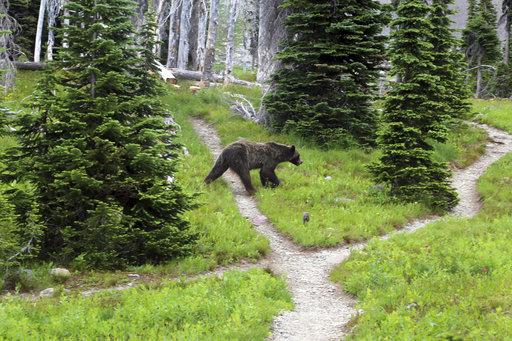 Northwest Montana Grizzlies_318320