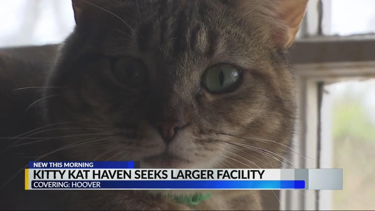 Kitty Kat Haven
