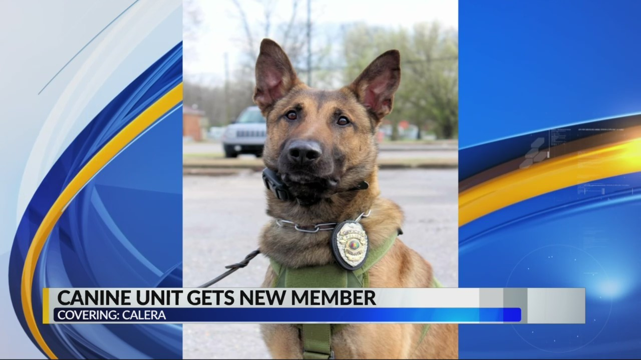 Meet the latest GOOD BOY added to the Calera police department